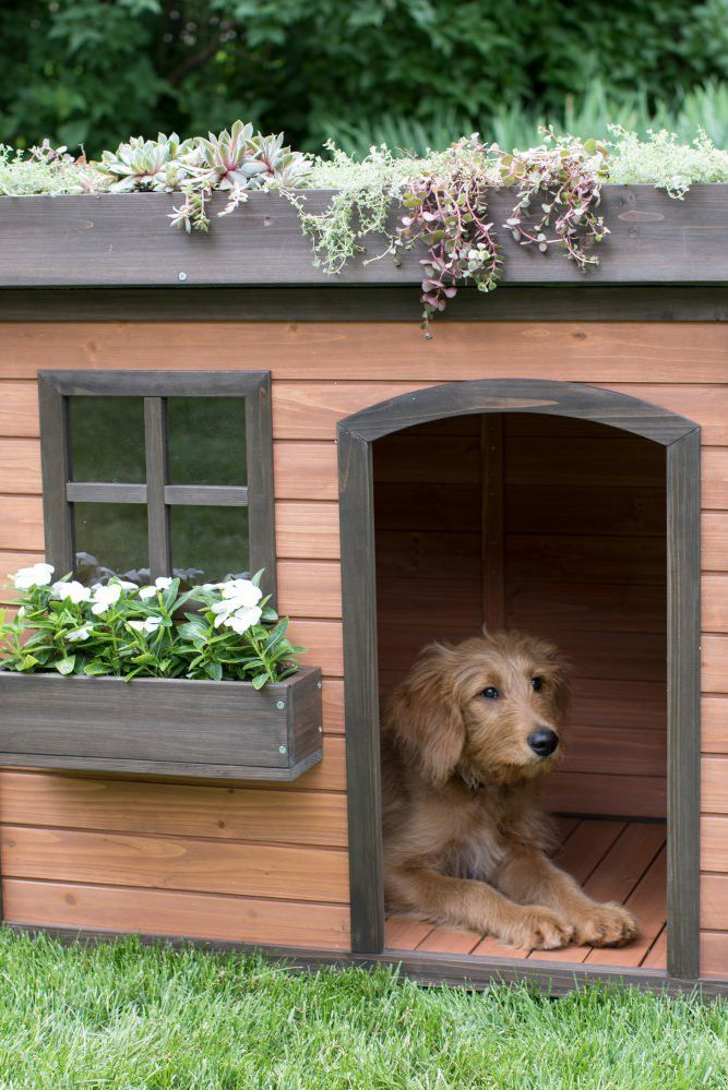 15 of the most amazing dog houses you can buy dog houses chicken rh pinterest ca