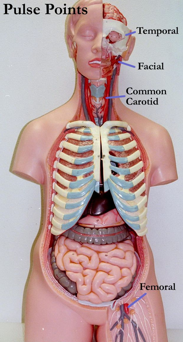 47 best Anatomy and Physiology images on Pinterest   Anatomy and ...