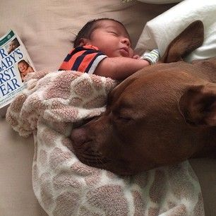 Would you trust your baby next to a Pit Bull?