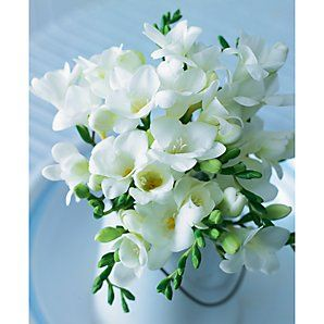 Freesia. My wedding flowers, and one of the best smelling things in the world.