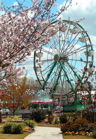 """Macon is in the pink in springtime, as 300,000 Yoshino cherry trees planted all over town unfurl their blossoms in the optimistically dubbed """"Cherry Blossom Capital of the World."""" The International Cherry Tree Festival, which was started 13 years after the first 500 trees were planted by city boosters in 1973, encompasses cherry blossom bus tours, a grand ball and parade, live music, bed races, a craft fair – and alligator wrestling.    When to go: The International Cherry Tree Festival is…"""