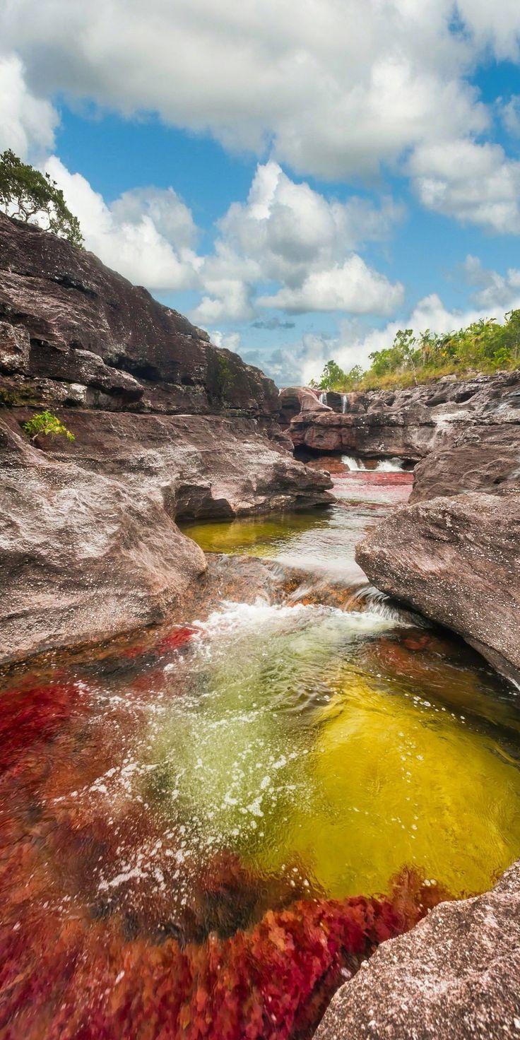 Le Caño Cristales est une rivière de Colombie, affluent du Río Guayabero, située dans la serranía de la Macarena, en Colombie. #Colombia #cañocristales