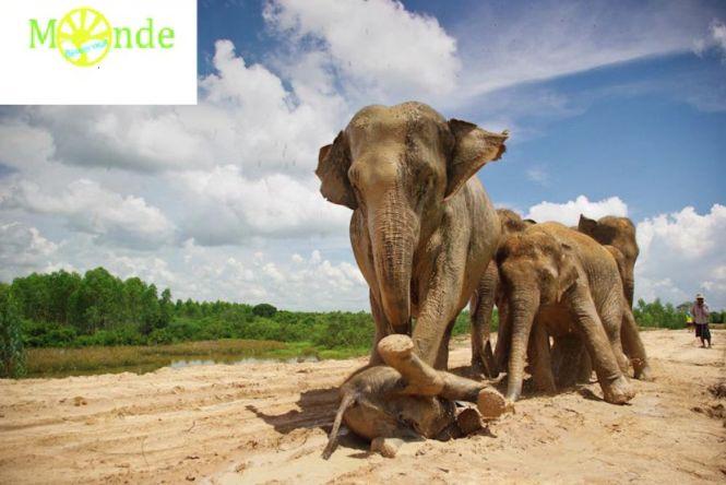 """""""Partir à la quête du monde... Comme un besoin vital"""" pour Karène, auxiliaire spécialisée vétérinaire, qui s'envole pour contribuer à la sauvegarde des Éléphants en Thaïlande !   https://starter.globedreamers.com/crowdfunding/travels/partir-a-la-quete-du-monde-comme-un-besoin-vital"""