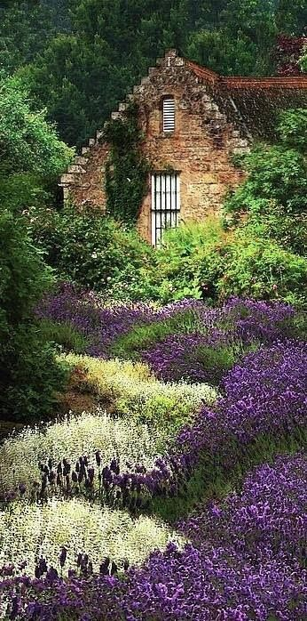 Cottage amidst the lavenders in the highlands of Scotland - I would like bunches of Lavender near my swing and near my front door... it's calming, soothing, helps burns, repels certain pests and smells lovely