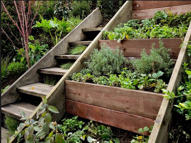 Backyard DIY herb garden stairs; great way to adapt gardening to slopes. Hgtv.com