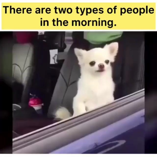 Good Morning Guys Are You On The Left Or On The Right Practice Your English Every Day It Is Impor Funny Dog Memes Funny Animal Memes Funny Memes