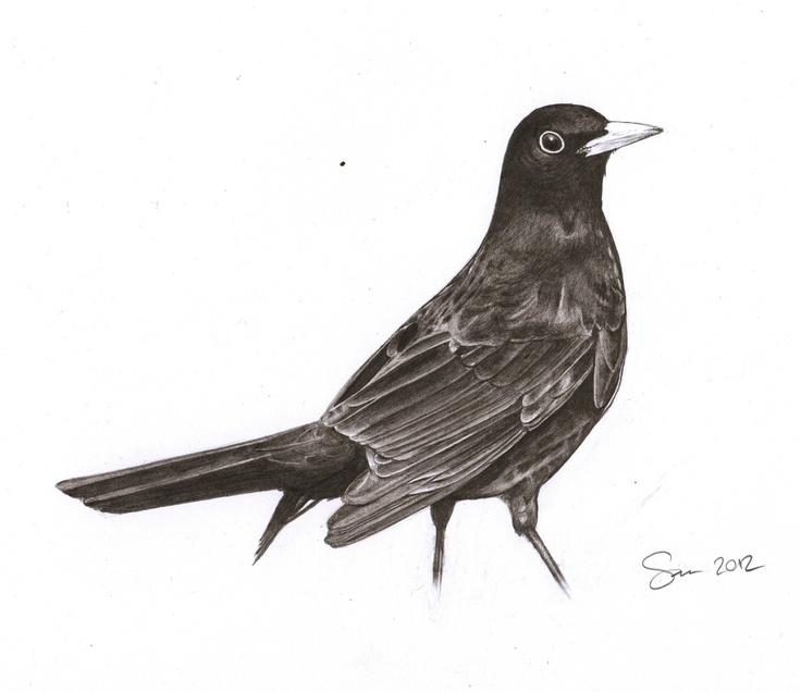 Pencil Drawing Of A Blackbird | Tattoo | Pinterest | Drawings