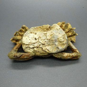 Pusaka Fosil Kepiting Kuno