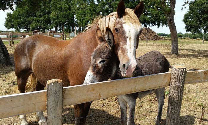 3856 | Cheval et âne -