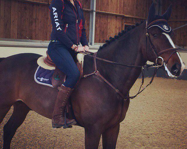 1067 best horse things images on Pinterest Horses, Horseback - equine release form