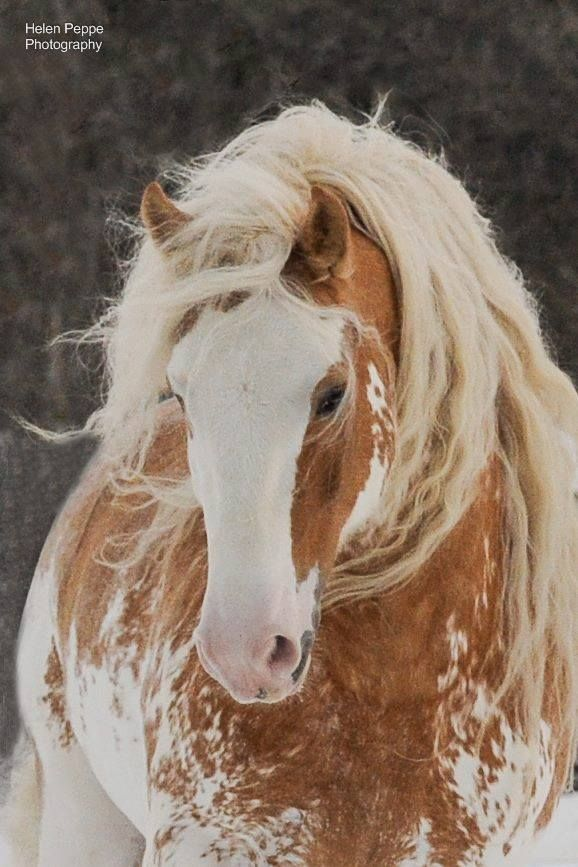 Beautiful, I guess there's a lot of these speckled colored horses out there, they are all beautiful