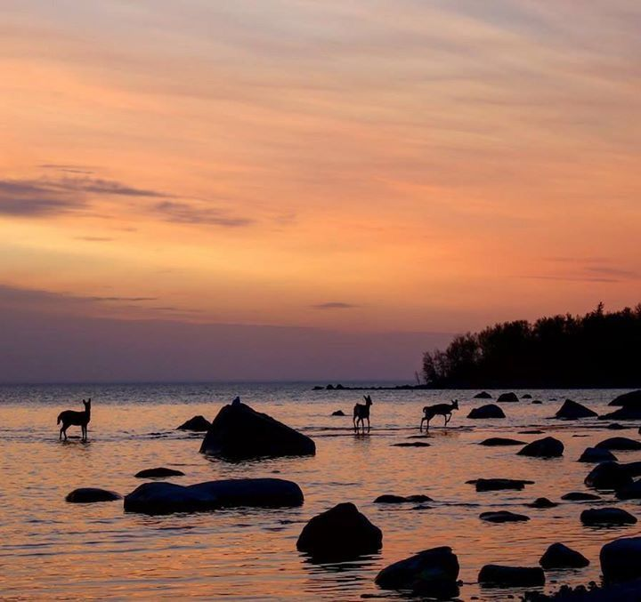 Manitoba scene by Corinne Flaws (Victoria Beach)