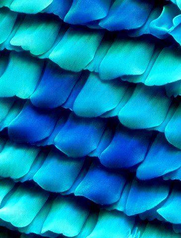 Microscopic pic