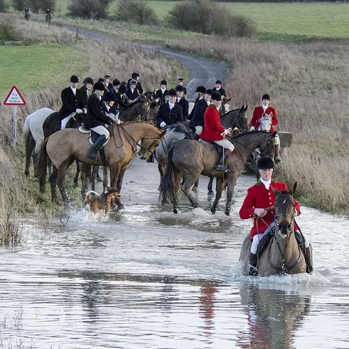 Would love to go on a Fox hunt one day.