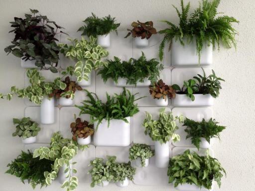Creare una parete vegetale per decorare casa! Ecco 20 idee per ispirarvi… VIDEO