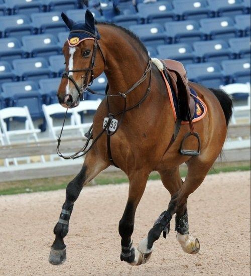 This show jumping horse is stunning even sans rider