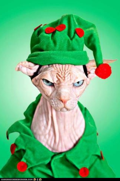 Hairless cat makes a Grumpy Elf.  I'd be really PO'd too. There's a reason pets attack their owners.