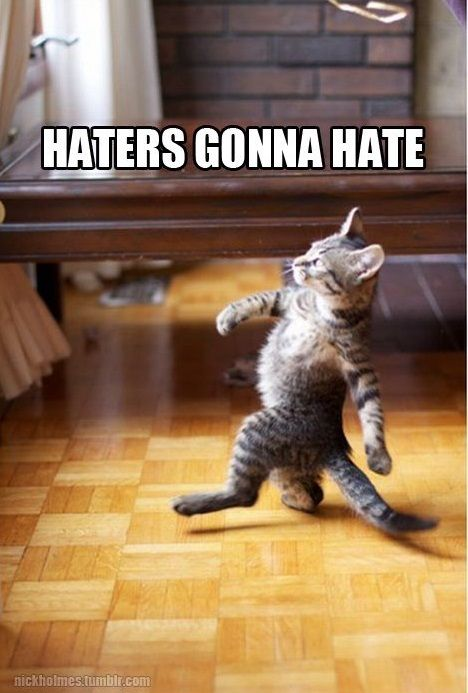 haters gonna hate funny cat memes  Get the tech job with your dream company through us http://recruitingforgood.com/