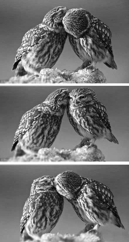 Owl Love http://www.aliexpress-myselfjewellery.com