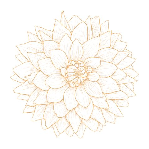 Dahlia flower tattoo designs
