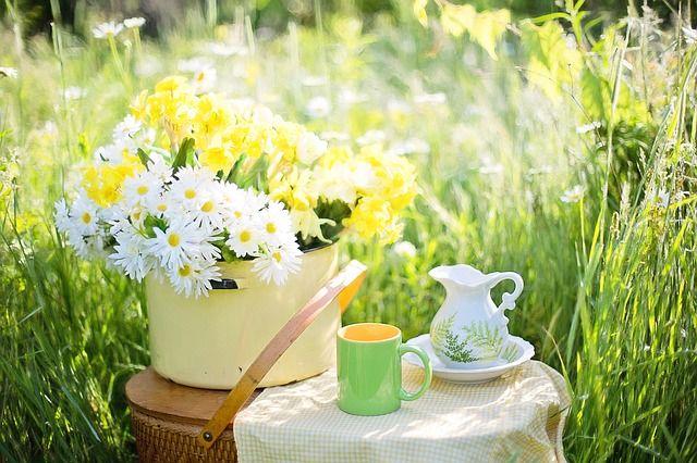 Przeczytaj wpis na naszym blogu na temat wykorzystania w uprawie roślin fusów od kawy i herbaty, a przekonasz się, że nie warto ich wyrzucać.