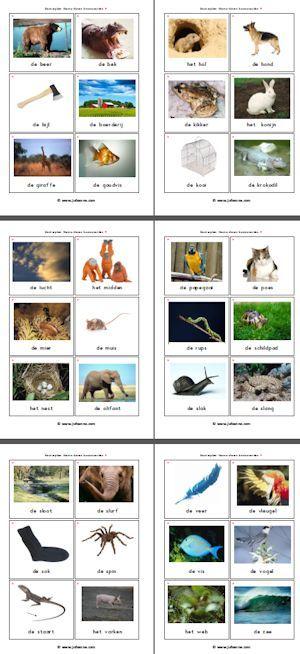 Kleuterplein thema dieren » Juf Sanne