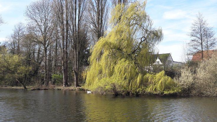 Frühling an den Niepkuhlen im Naturschutzgebiet Riethbenden in Krefeld.