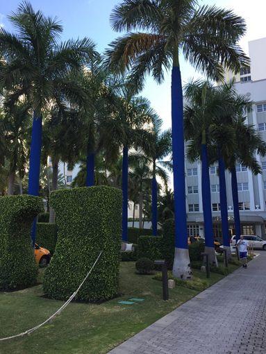 Oasis, Lucio Micheletti, Miami.