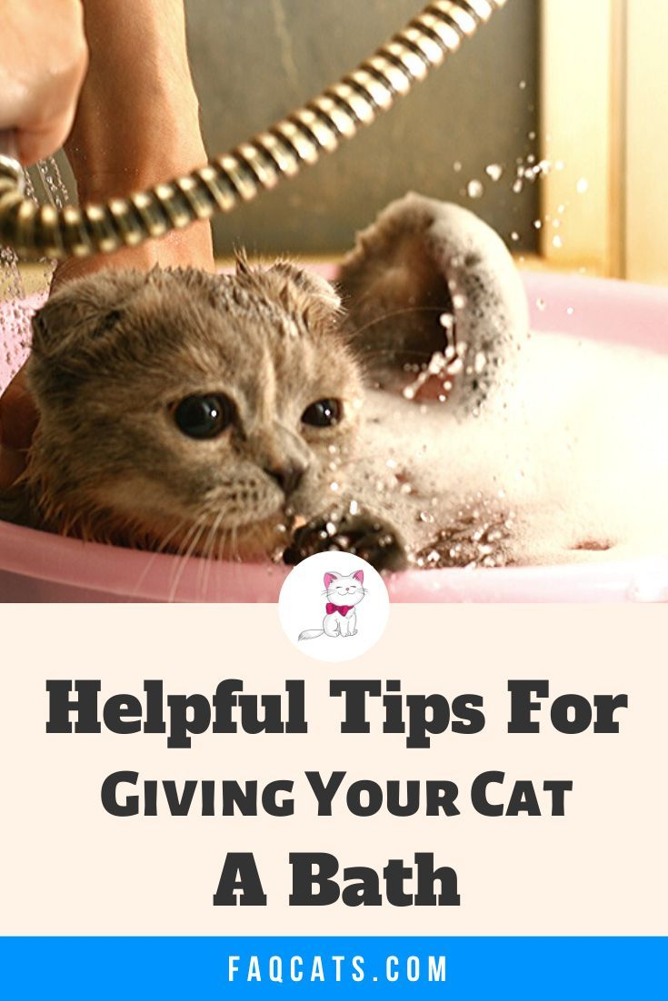 Do Tabby Cats Really Need Baths Faqcats Com In 2020 Cute Cats And Kittens Tabby Cat Kitten Care