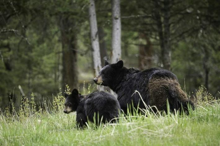 osos en mexico