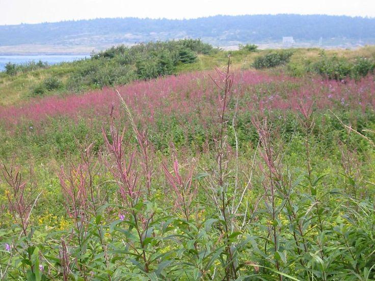 Brier Island field of wildflowers | © Mike James