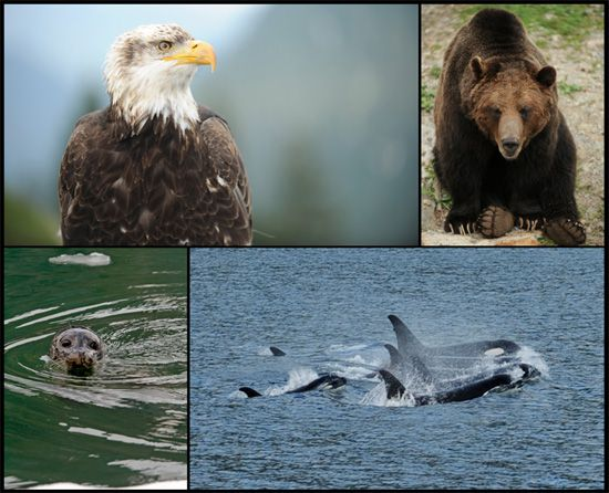Disney cruise alaska | Explore Alaska's Wildlife with Disney Cruise ...