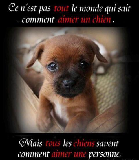 Cette lettre a été écrite par un employer de la fouriere, cela est vrai hélas donc aimer votre chien autan qu'il vous aime