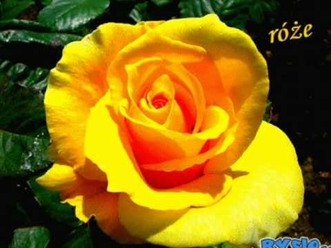 Tysiąc róż na pożegnanie-Kis-Lech Stawski.wmv - YouTube