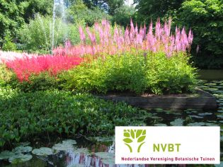 2e persoon gratis bij bezoek aan de Nederlandse botanische tuinen