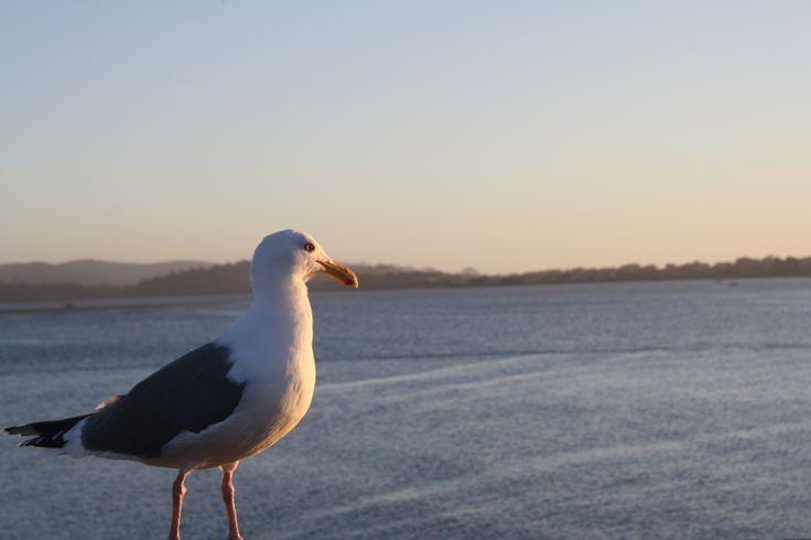 Bird! Seagull!  http://phourfriend-haley.deviantart.com/