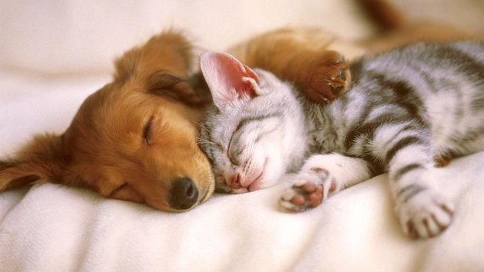 sehr lustige gute nacht bilder für whatsapp    eine graue schlafende kleine katze und ein schlafender kleiner hund