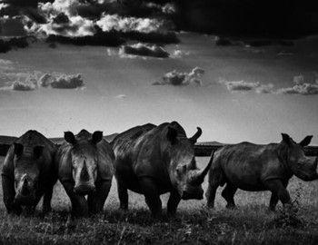Το ταξίδι στην Αφρική αποτελεί όνειρο ζωής για πολλούς. Το βιβλίο «The Family Album of Wild Africa» σε βάζει στα άδυτα της Άγριας Δύσης της Μαύρης Ηπείρου. Εικονογραφικά στο βιβλίο έχει γίνει εκπληκτική δουλειά που