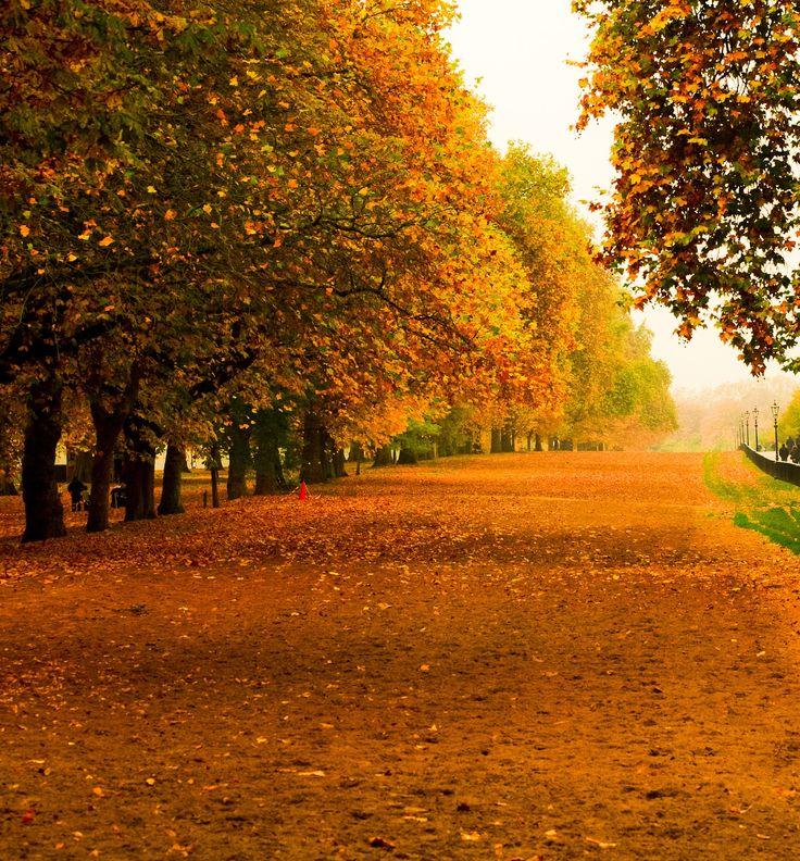 On A Misty Morning - Hyde Park, London.