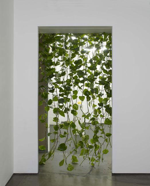 Living Curtain:: Pothos Plants (Epipremnum aureum) are easy to care for and will hang and climb as much as you let them.