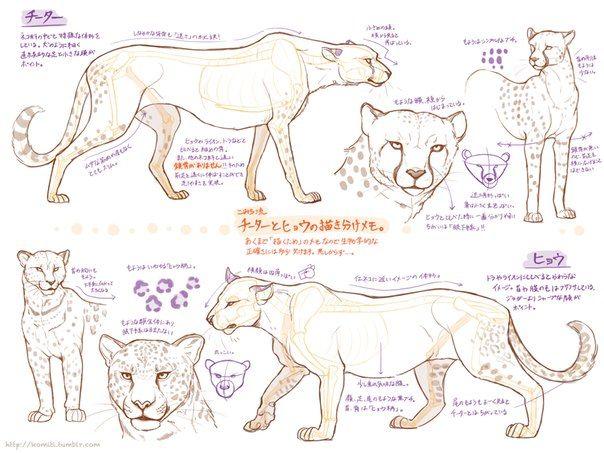 Célèbre 278 besten How to draw animals Bilder auf Pinterest | Tiere, harte  AI61