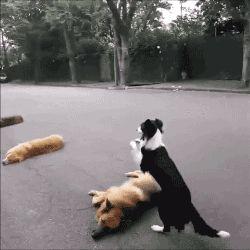 here we have a pooch.....playing Leap dog....hehehehe https://plus.google.com/+CaptainJack63/posts/UuEEXCWegGW