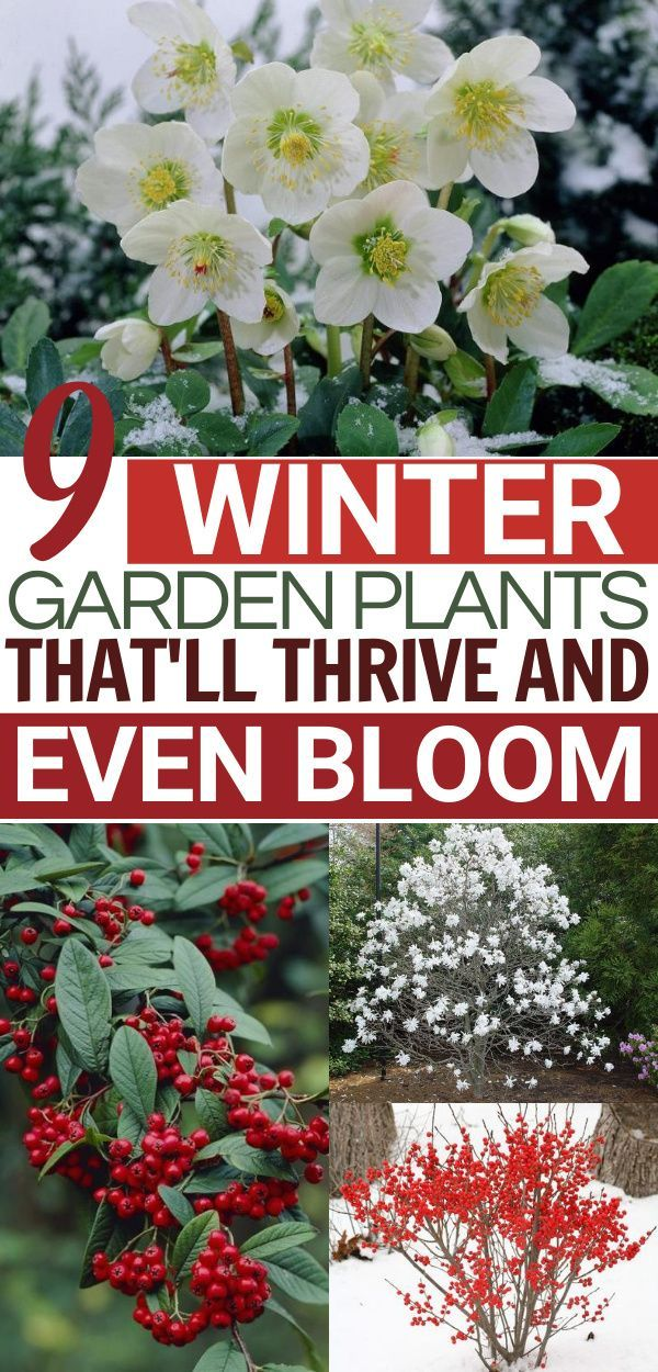 What Flowers Are In Season Ftd Com Winter Flowers In Season Spring Flowers Names Winter Flowers