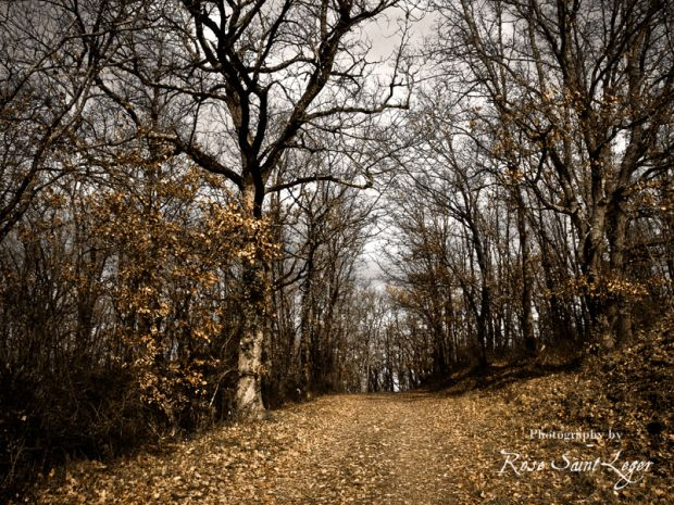 Late Autumn #photography #fineart #autumn #fall