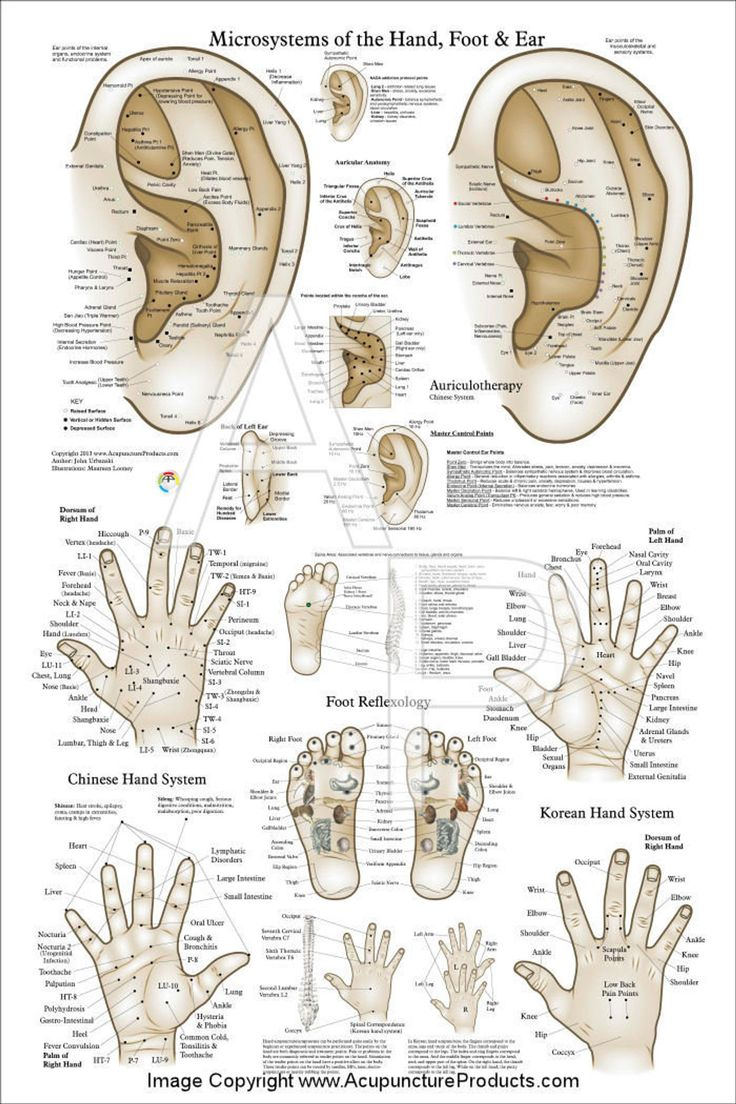Acupuncture Ear Hand Foot Microsystem Poster 24 X Etsy