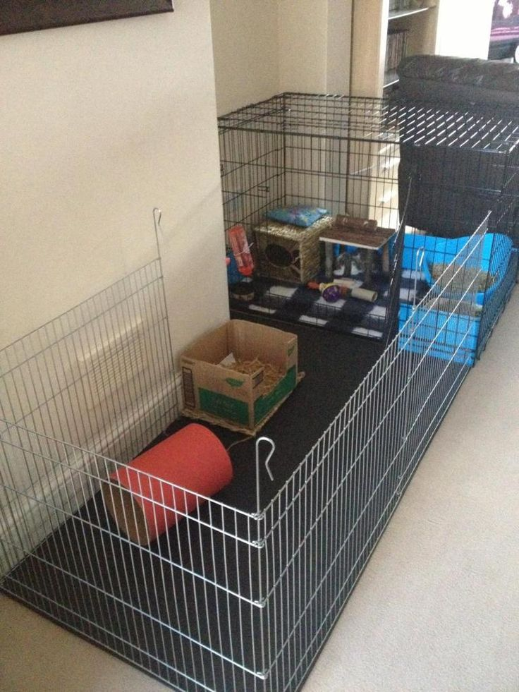 Diesels new home - Rabbits United Forum - Extending a puppy crate with a puppy pen
