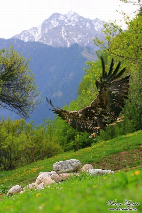 Kazakhstan mighty falcons view