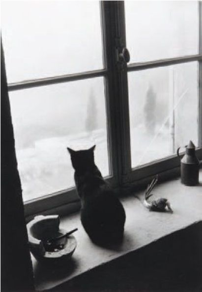 By Signe Kassow on January 6, 2012 in Photography. Le chat derrière la fenêtre, 1956