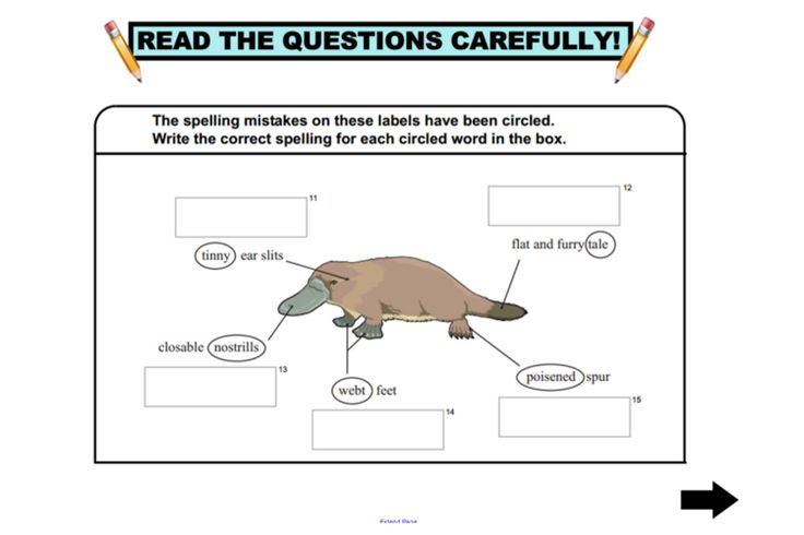 Year 5 NAPALN Language Conventions practice questions for IWB http://interactivelessons.com.au/