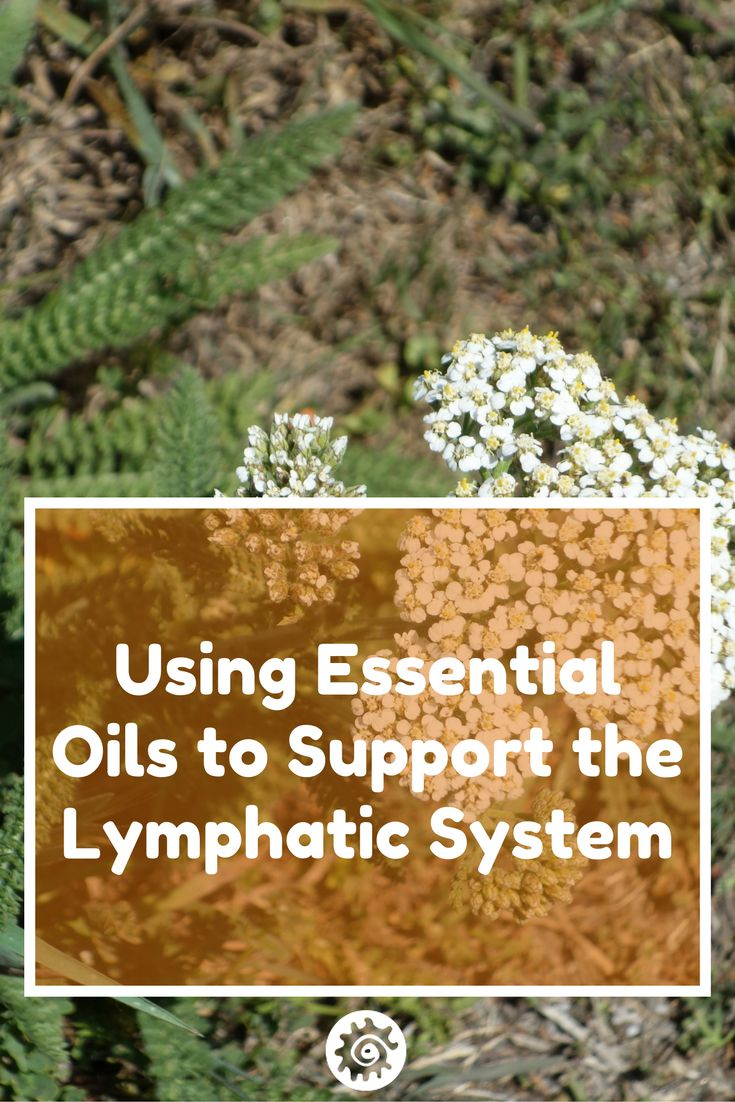 Lymph part of the circulatory system - Unlike The Circulatory System The Lymphatic System Does Not Have A Pump To Circulate Or